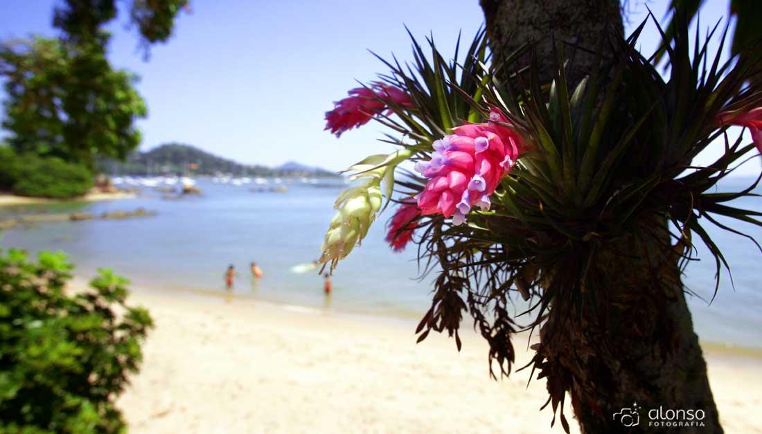 Praia de Santo Antônio de Lisboa, o que fazer em Florianópolis
